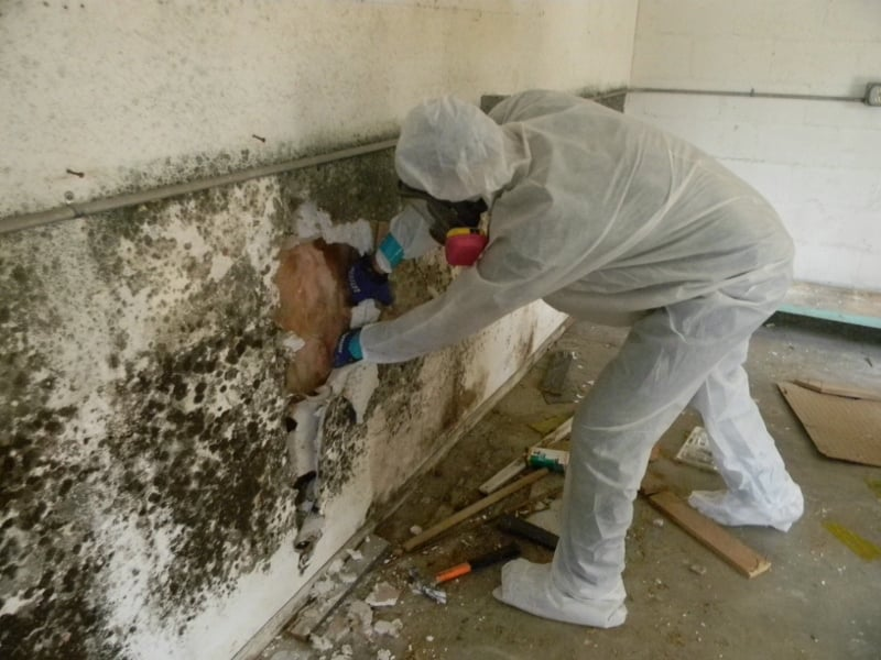 The truth about mold removal and mold remediation moldmanusa for Household cement